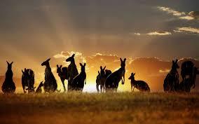 باغ وحش استرالیا